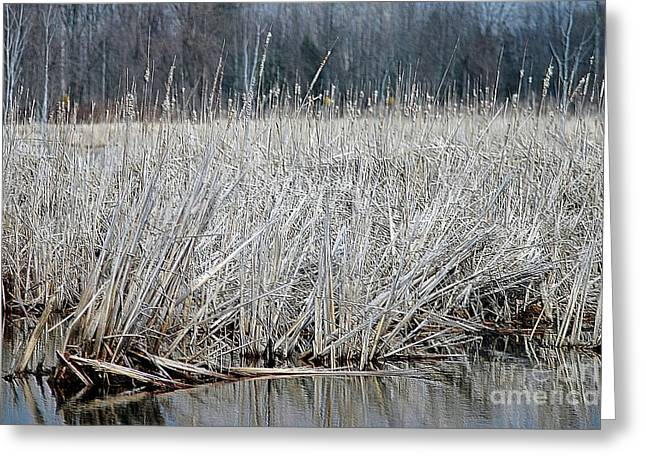 Morass Greeting Cards - Marsh Land Greeting Card by Kathleen Struckle