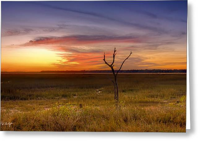 Beaufort County Greeting Cards - Marsh Night Greeting Card by Phill  Doherty