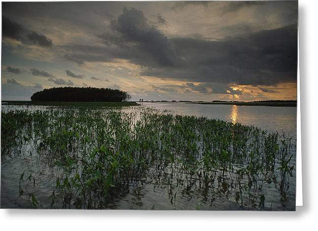 Aquatic Plants Greeting Cards - Marsh Plants And Clouds Greeting Card by James P. Blair