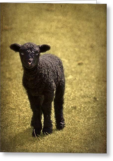 England Rural Village Greeting Cards - Mary Had A Little Lamb Greeting Card by Evelina Kremsdorf