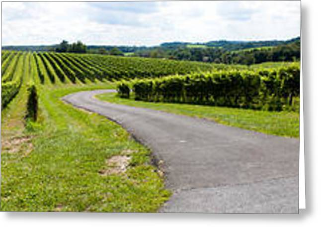 Grape Vineyard Greeting Cards - Maryland Vineyard Panorama Greeting Card by Thomas Marchessault