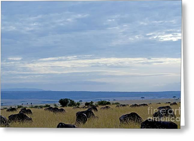 Masai Mara Greeting Card by Pravine Chester