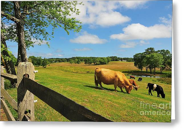 Massachusetts Farm Greeting Card by Catherine Reusch  Daley