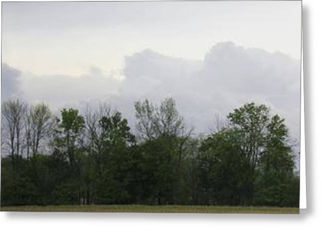 Indiana Trees Greeting Cards - Matching Sky Lines Greeting Card by Ed Smith