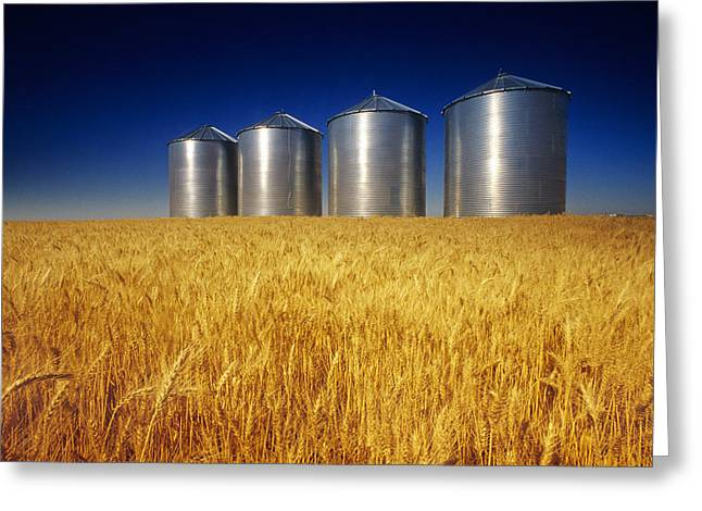 Mature Winter Wheat Field With Grain Greeting Card by Dave Reede