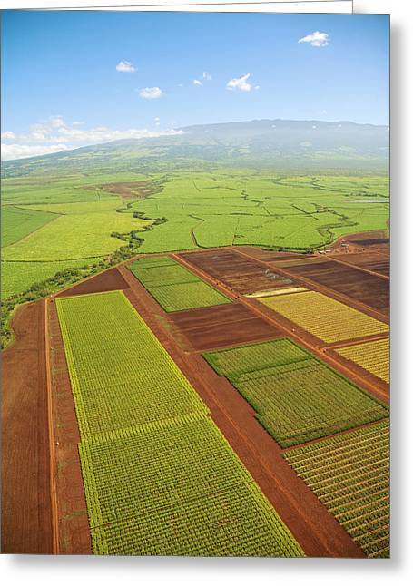 Farmers Field Greeting Cards - Maui Crops Greeting Card by Ron Dahlquist - Printscapes