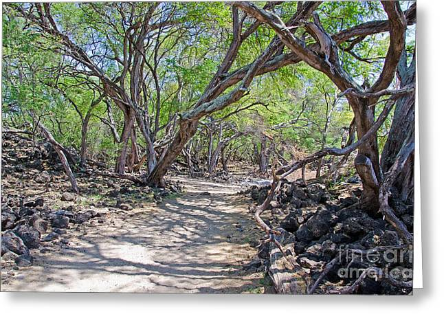 La Perouse Bay Greeting Cards - Maui Kiawe trees Greeting Card by Baywest Imaging