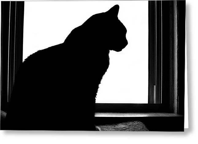 Felines Dale Ford Greeting Cards - Max in Silhouette Greeting Card by Dale   Ford