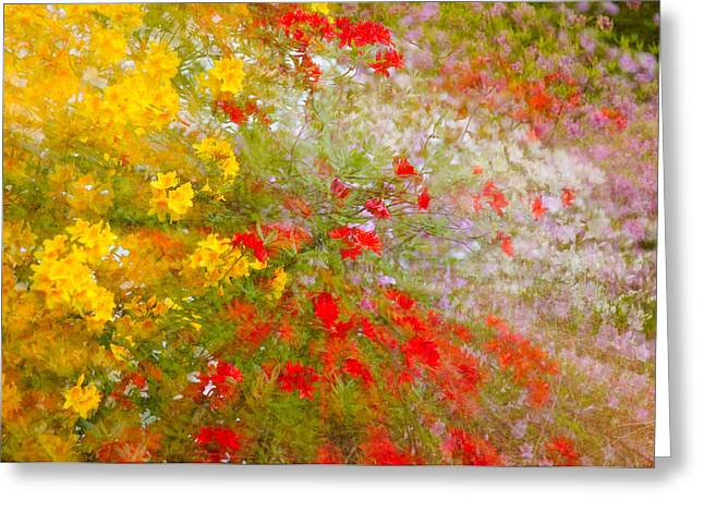 May Impression Greeting Card by Bobbie Climer