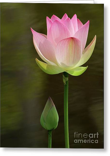 Lotus Bud Greeting Cards - Me and A Bud Greeting Card by Sabrina L Ryan