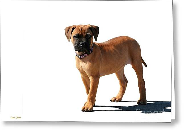 Dog Walking Digital Art Greeting Cards - Me and My Shadow 2 Greeting Card by Dale   Ford
