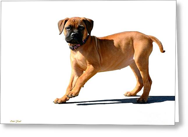 Dog Walking Digital Art Greeting Cards - Me and My Shadow 3 Greeting Card by Dale   Ford
