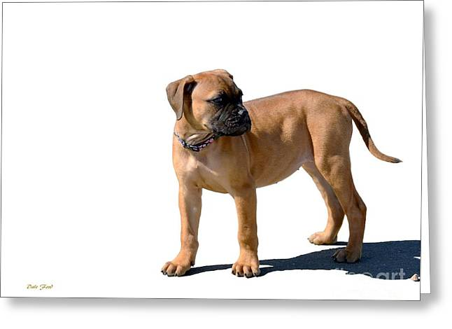 Dog Walking Digital Art Greeting Cards - Me and My Shadow 4 Greeting Card by Dale   Ford