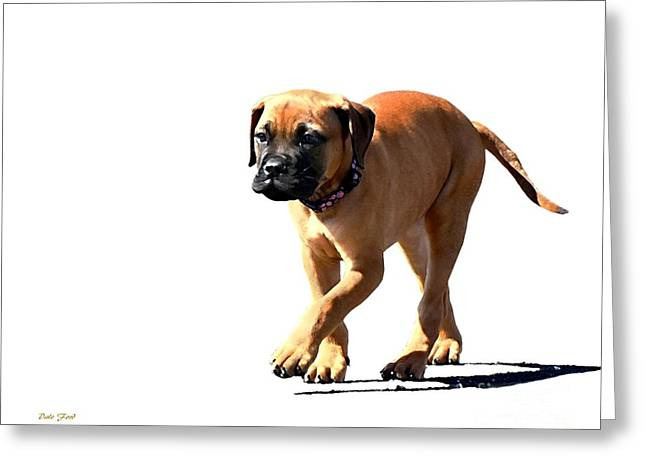 Dog Walking Digital Art Greeting Cards - Me and My Shadow 5 Greeting Card by Dale   Ford