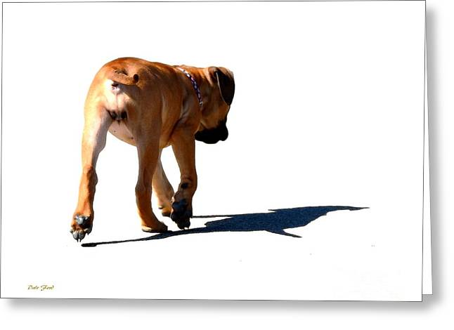Dog Walking Digital Art Greeting Cards - Me and My Shadow Greeting Card by Dale   Ford