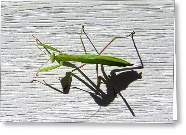 Mantises Greeting Cards - Me And My Shadow Greeting Card by Will Borden
