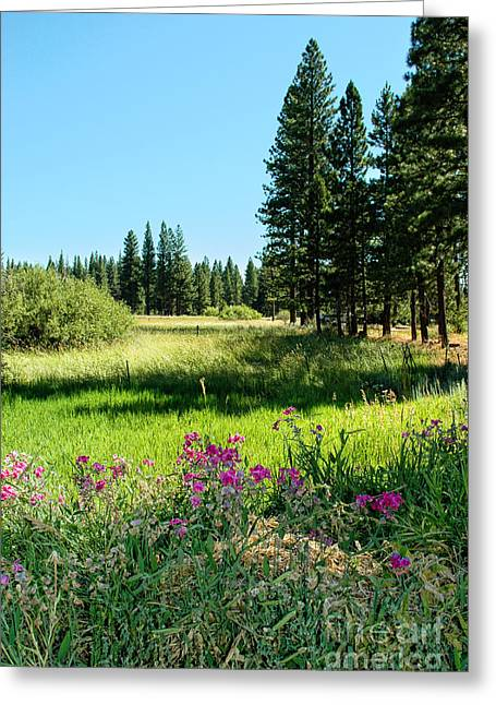 Sunny Photographs Greeting Cards - Meadow Greeting Card by HD Connelly