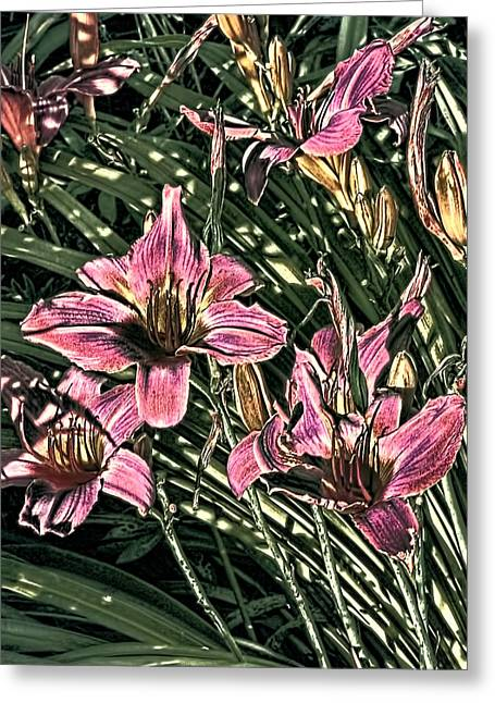 Floral Photographs Digital Greeting Cards - Meadow Sunrise Greeting Card by Tom Prendergast