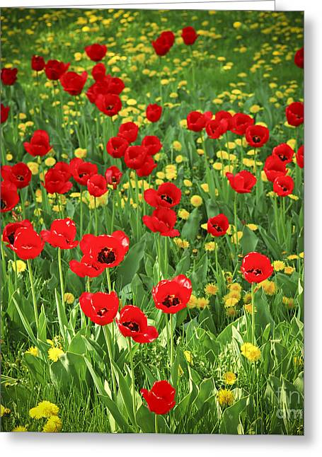 Meadow Photographs Greeting Cards - Meadow with tulips Greeting Card by Elena Elisseeva
