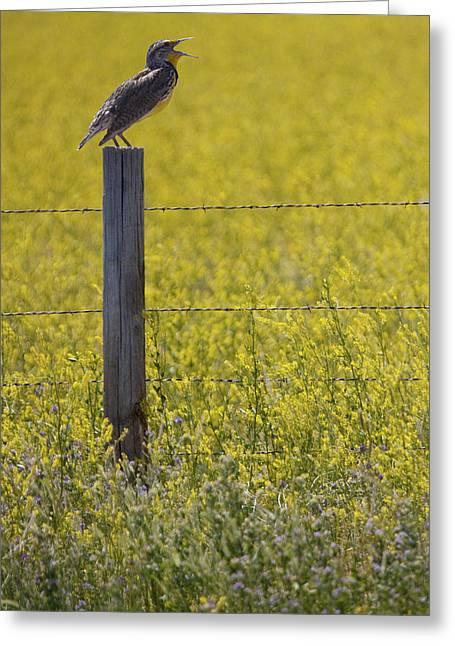 Meadowlark Singing Greeting Card by Randall Nyhof