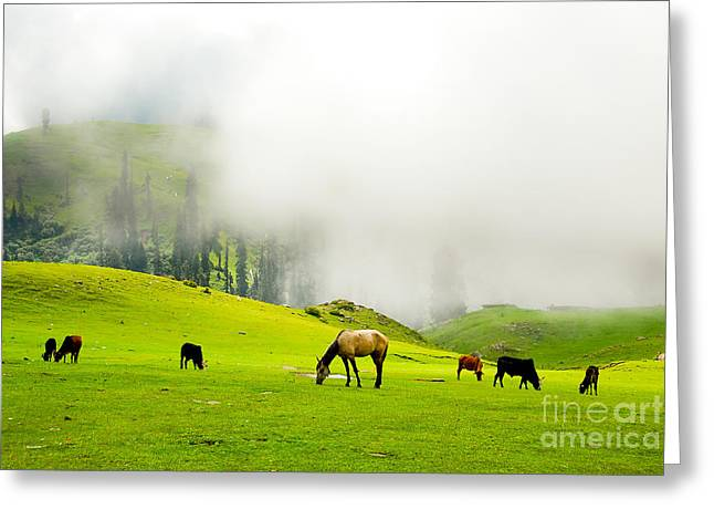 Lush Green Greeting Cards - Meadows of Heaven Greeting Card by Syed Aqueel