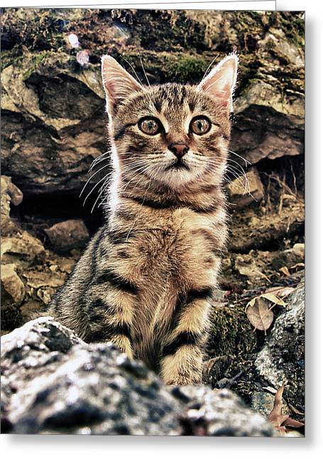 Puss Greeting Cards - Mediterranean Wild Babe Cat Greeting Card by Stylianos Kleanthous