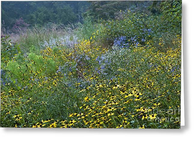 Aster Greeting Cards - Medow Wildflowers Greeting Card by John Greim