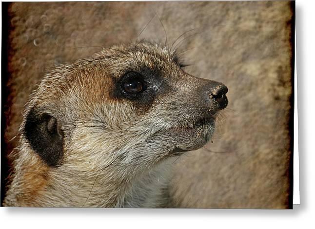 Meerkat Photographs Greeting Cards - Meerkat 3 Greeting Card by Ernie Echols