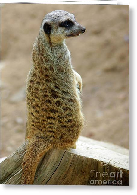 Lookout Greeting Cards - Meerkat Portrait Greeting Card by Carlos Caetano