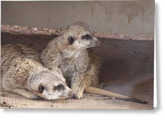 Meerkats Greeting Card by Linda A Waterhouse