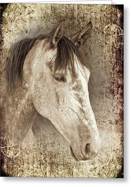 Bred Greeting Cards - Meet The Andalucian Greeting Card by Meirion Matthias