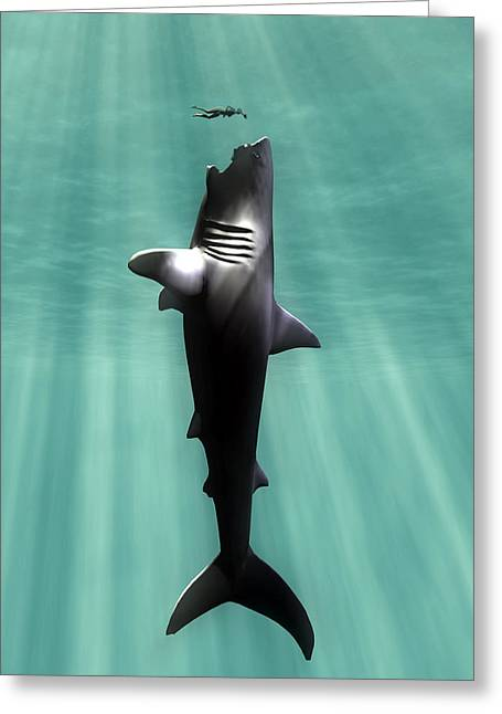 Swimmers Greeting Cards - Megalodon Prehistoric Shark With Human Greeting Card by Christian Darkin