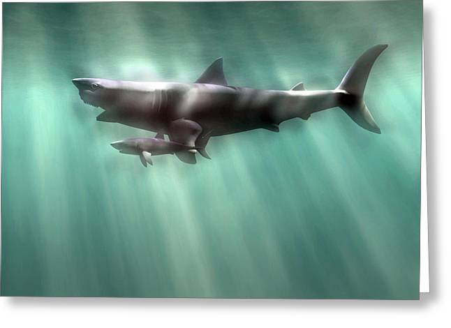 White Shark Greeting Cards - Megalodon Shark And Great White Greeting Card by Christian Darkin
