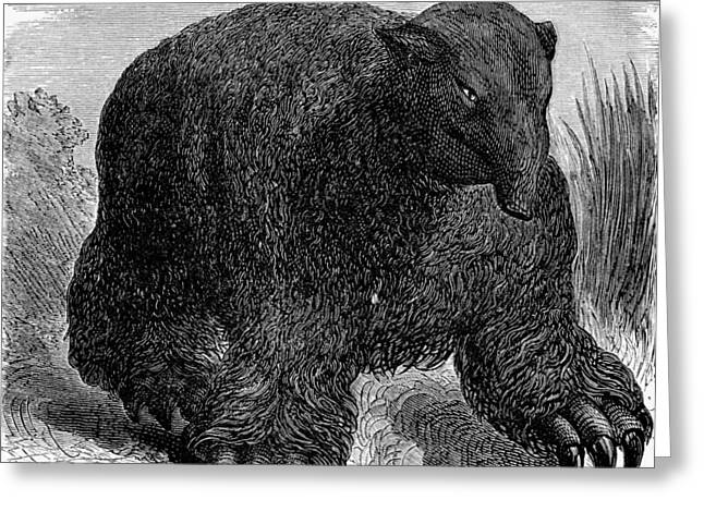 Sloth Greeting Cards - Megatherium, 19th Century Artwork Greeting Card by