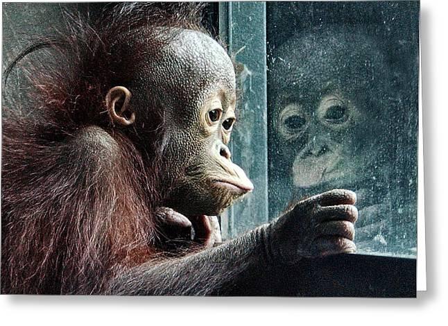 Orangutan Greeting Cards - Melancholy Baby Greeting Card by Wade Aiken