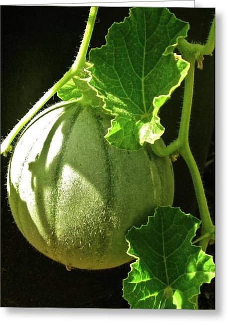 Melon Greeting Cards - Mellow Mellon Greeting Card by Gwyn Newcombe
