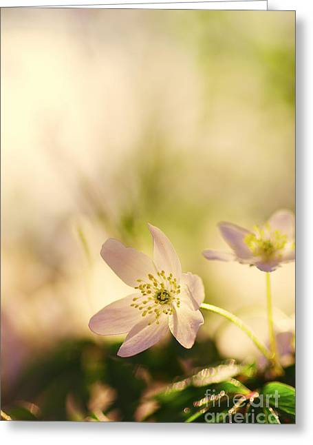 Bloosom Greeting Cards - Melody of Spring Greeting Card by Tanja Riedel