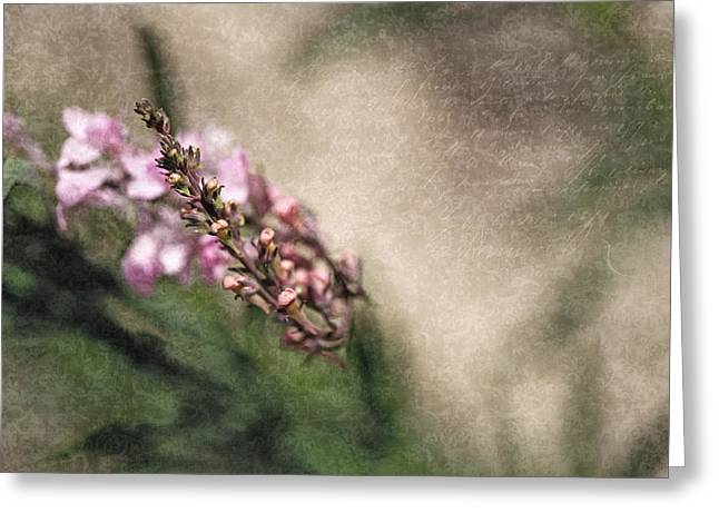 Textured Floral Greeting Cards - Memories Captured Greeting Card by Bonnie Bruno