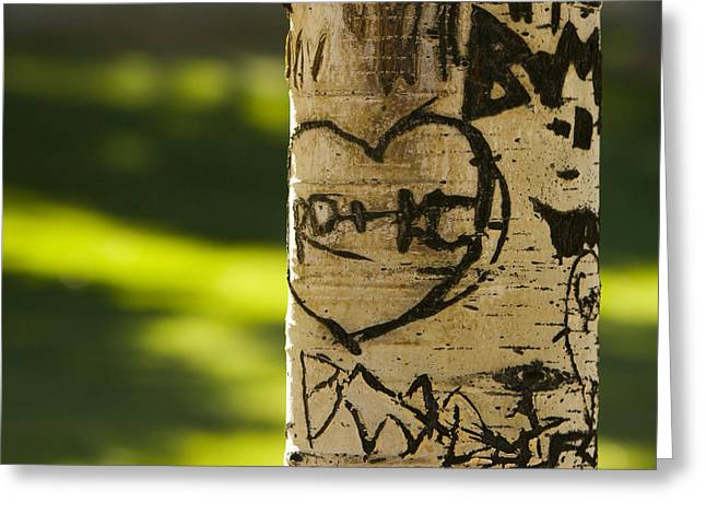 Carving Greeting Cards - Memories in the Aspen Tree Greeting Card by James BO  Insogna