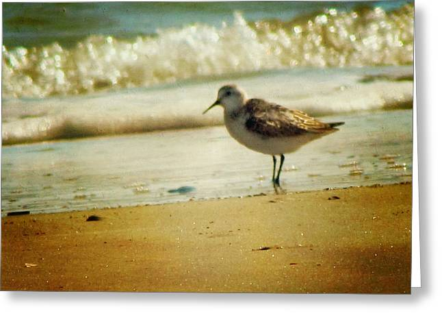 Sandpipers Greeting Cards - Memories of Summer Greeting Card by Amy Tyler