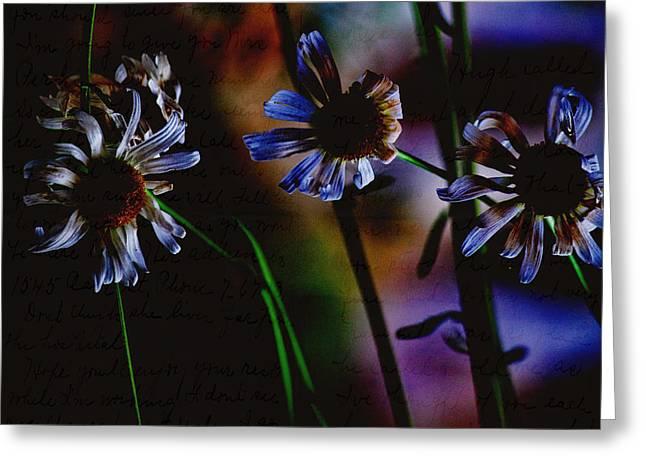 Brown Eye Susan Greeting Cards - Memory Garden Greeting Card by Bonnie Bruno
