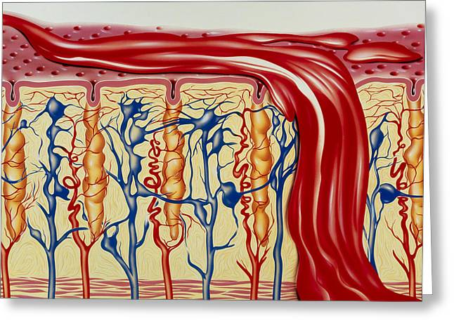 Uterus Greeting Cards - Menstruation Greeting Card by John Bavosi