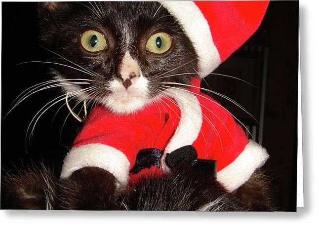 Meow Humbug Greeting Card by Mark Holbrook