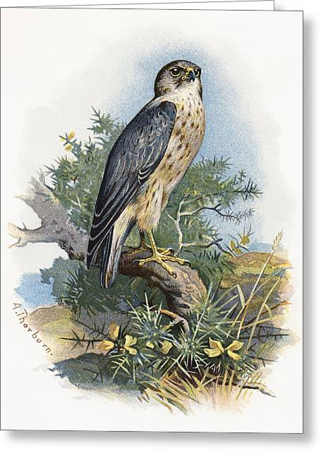 Merlin Greeting Cards - Merlin, Historical Artwork Greeting Card by Sheila Terry