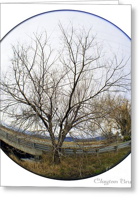 Reserve Greeting Cards - Mesmerizing Tree Greeting Card by Clayton Bruster