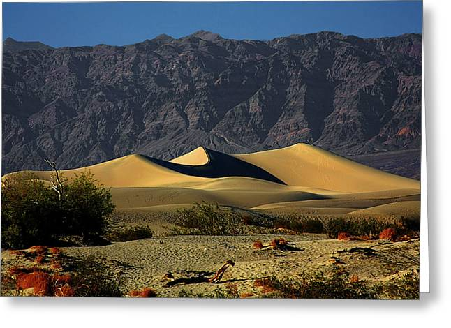 Preserved Greeting Cards - Mesquite Flat Dunes - Death Valley California Greeting Card by Christine Till