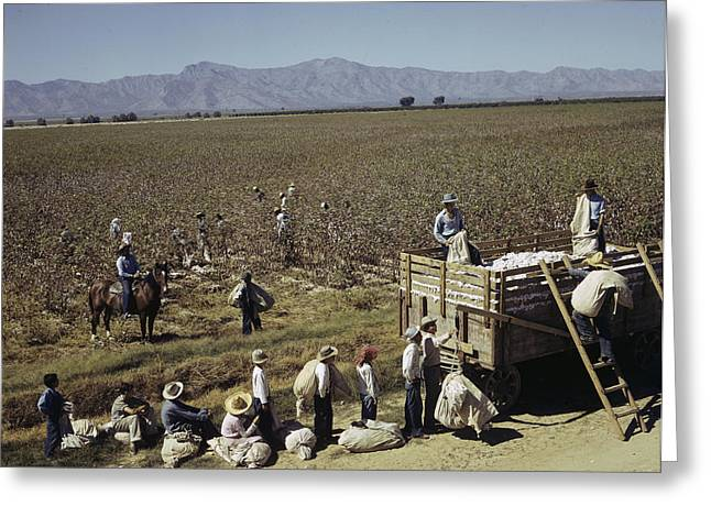 Manual Greeting Cards - Mexican Cotton Pickers Work Greeting Card by Willard Culver