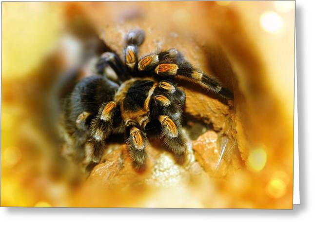 Black Greeting Cards - Mexican Red-leg Tarantula Greeting Card by Victor Habbick Visions
