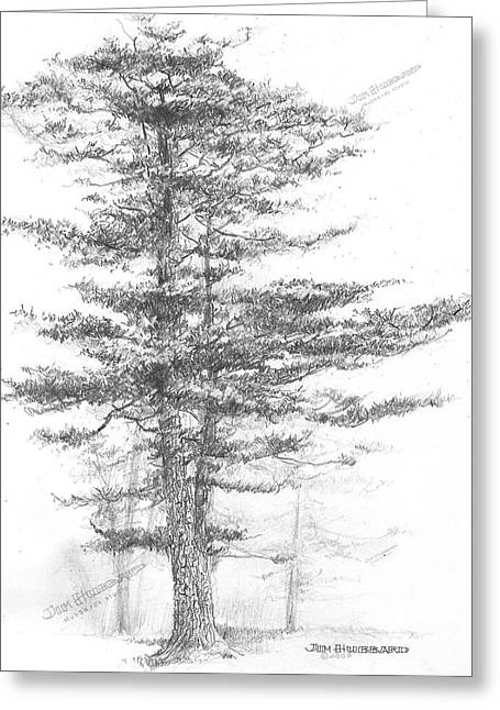 Universities Drawings Greeting Cards - Michigan-Eastern White Pine Greeting Card by Jim Hubbard