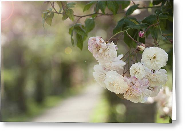 Kew Greeting Cards - Mid afternoon Rose Garden Greeting Card by EyeKandi Photography